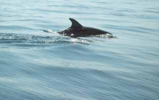 Dolphins in the harbour